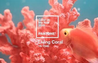 living corall - az év színe